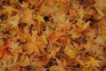 fall is beautiful in Oregon
